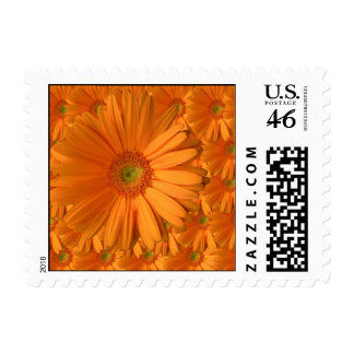 Orange Gerber Daisy Stamp
