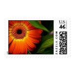 Orange Gerber Daisy Postage Stamp