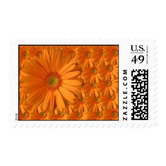 Orange Gerber Daisy Postage Stamps