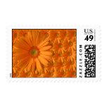 Orange Gerber Daisy Stamp
