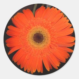 Orange Gerber Daisy Round Stickers