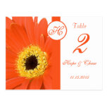 Orange Gerber Daisy Table Number Cards Postcards