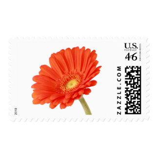 Orange Gerber Daisy Wedding Postage Stamps