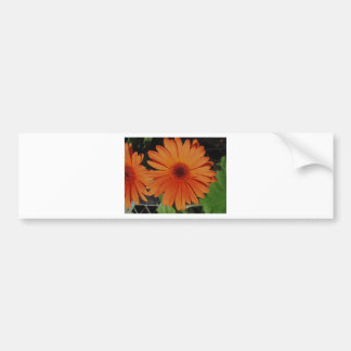 Orange Gerber gerbera Daisy daisie Bumper Sticker
