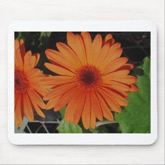 Orange Gerber gerbera Daisy daisie Mousepads