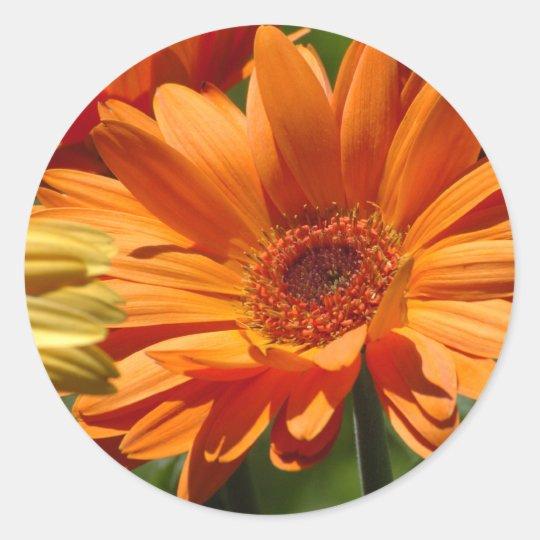 Orange Gerbera Classic Round Sticker