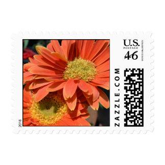 Orange Gerbera Daisies Stamp