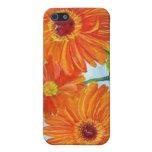 Orange Gerbera Daisies Speck Case iPhone 5 Covers