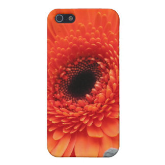 Orange Gerbera Daisy Case For iPhone SE/5/5s