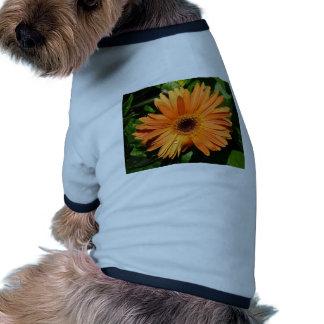 Orange Gerbera Daisy Dog Shirt