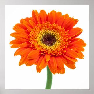 Orange Gerbera Daisy Flower Poster