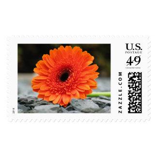 Orange Gerbera Daisy on Shale Background Postage Stamp