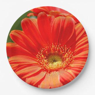 Orange Gerbera Daisy Paper Plates 9 Inch Paper Plate