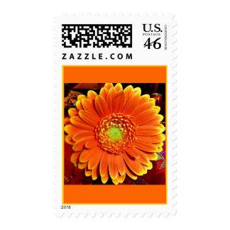 Orange Gerbera Daisy Postage Stamp