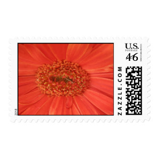 Orange Gerbera Daisy Stamp