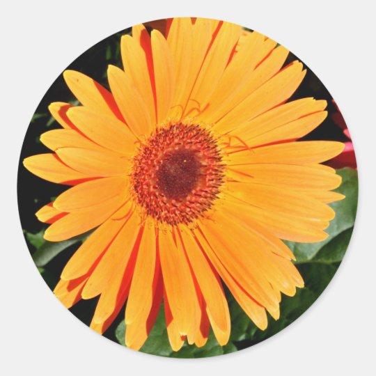 orange gerbera daisy stickers
