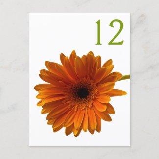 Orange Gerbera Daisy Table Number Card postcard