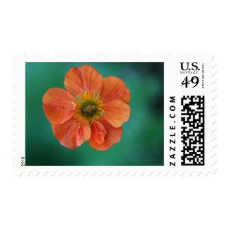 Orange Geum Stamp