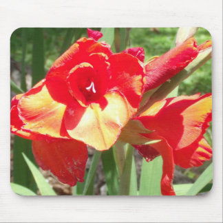 Orange Gladiolas Flowered Mousepad
