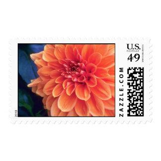 Orange Glorious orange flowers Stamp