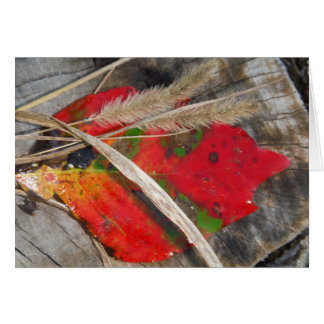 orange green, yellow and fall leaf and dried grass greeting card