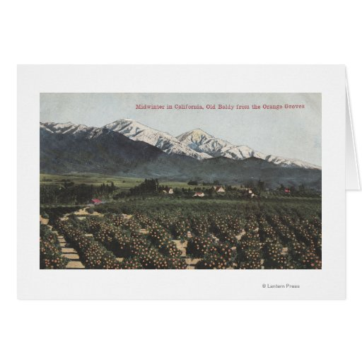 Orange Groves with Old Baldy Mt in Distance Card