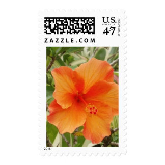 orange hawaii hibiscus plant postage