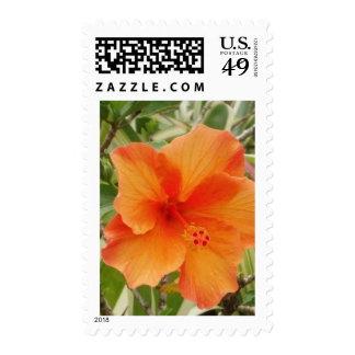 orange hawaii hibiscus plant postage stamps