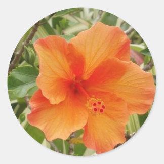 orange hawaii hibiscus plant round sticker