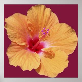Orange Hawaiian Hibiscus Poster