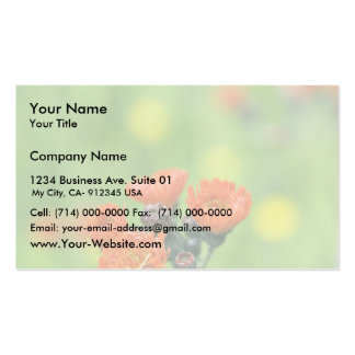 Orange Hawkweed, Sand Point, Alaska Double-Sided Standard Business Cards (Pack Of 100)