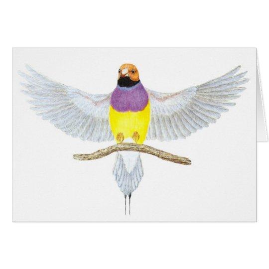 Orange-head Gouldian - Erythrura gouldiae Card