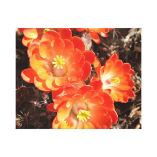 Orange Hedgehog Cactus Flower canvas Canvas Print