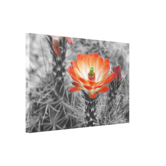 Orange Hedgehog Cactus flower Canvas Print
