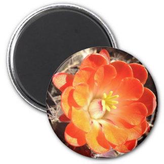 Orange Hedgehog Cactus Flower magnet