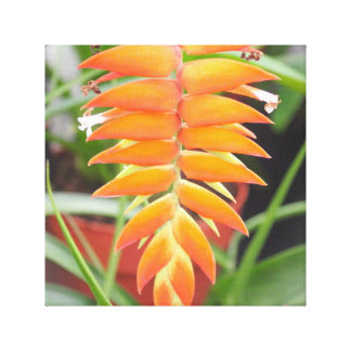 Orange Heliconia Flowers Stretched Canvas Canvas Prints