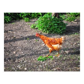 Orange hen personalized flyer