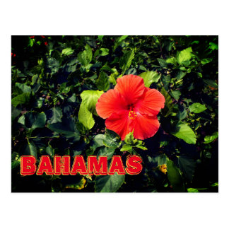 Orange Hibiscus Bahamas Postcard
