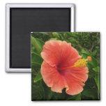 Orange Hibiscus Flower 2 Inch Square Magnet