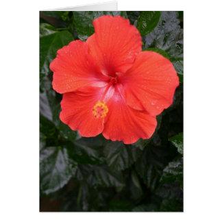 Orange Hibiscus Flower Card