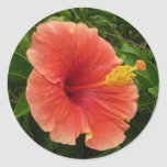 Orange Hibiscus Flower Classic Round Sticker