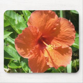 Orange Hibiscus Flower in Fort Lauderdale Florida Mouse Pad