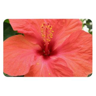 Orange Hibiscus Flower Macro Premium Magnet