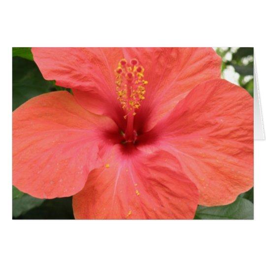 Orange Hibiscus Flower Mscro Custom Greeting Card
