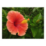 Orange Hibiscus Flower Photo Print