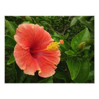 Orange Hibiscus Flower Photo Print