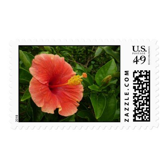 Orange Hibiscus Flower Postage