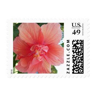 Orange Hibiscus Flower Postage Stamps