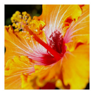 Orange Hibiscus Flower Side View Poster