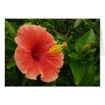 Orange Hibiscus Flower Tropical Floral Card